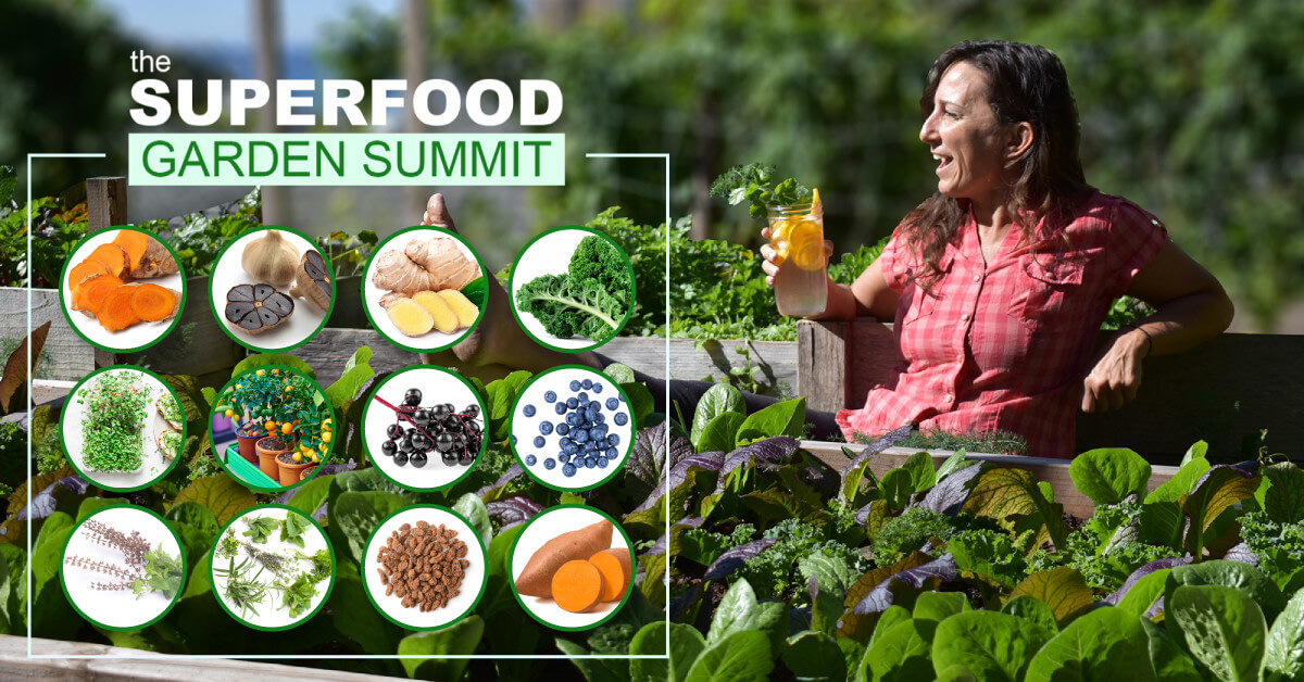 Superfood Summit